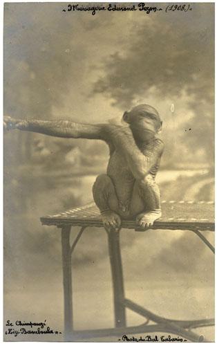 Zizi Bamboula le chimpanzé de la Ménagerie PEZON.